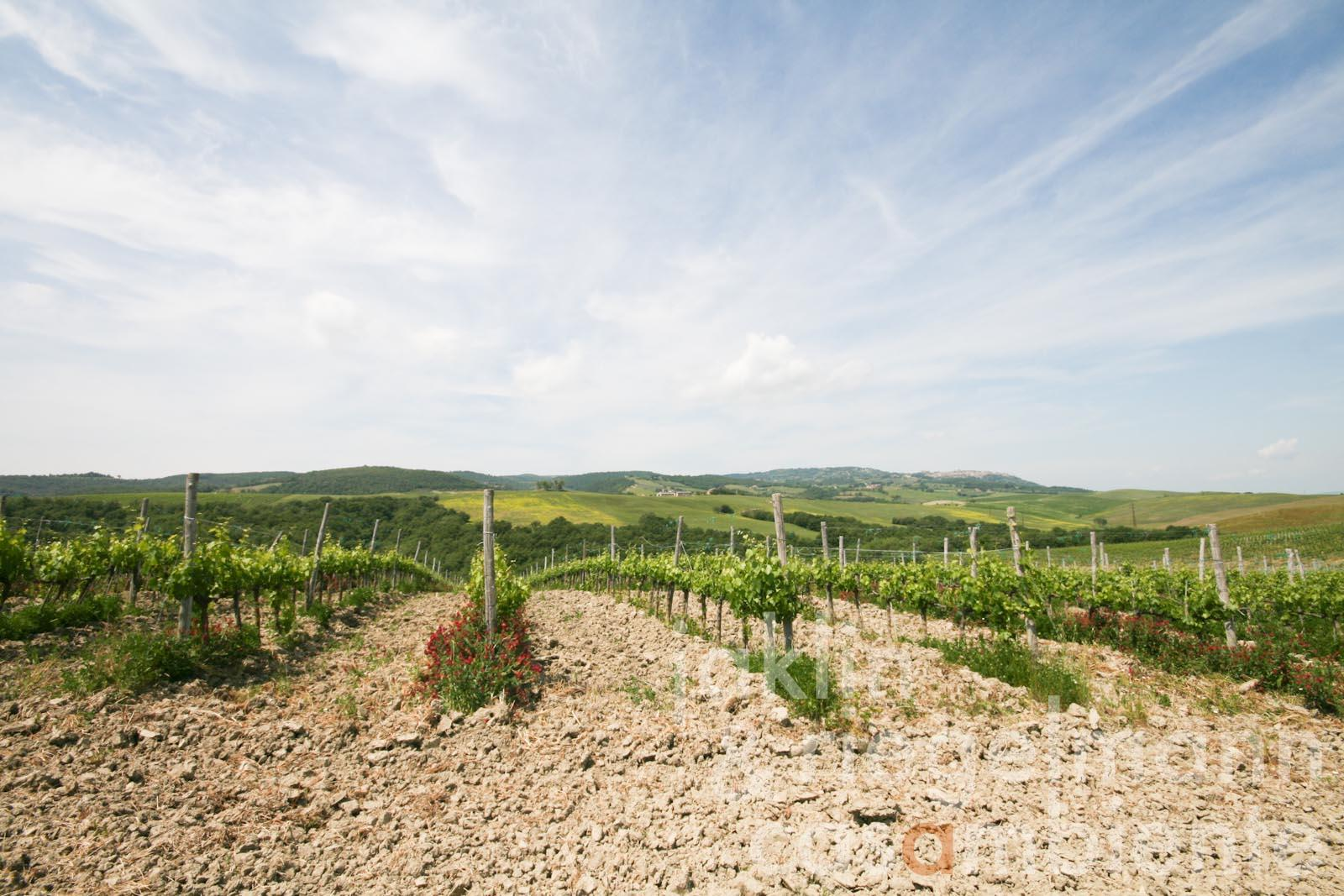 Farm with Brunello Vineyards