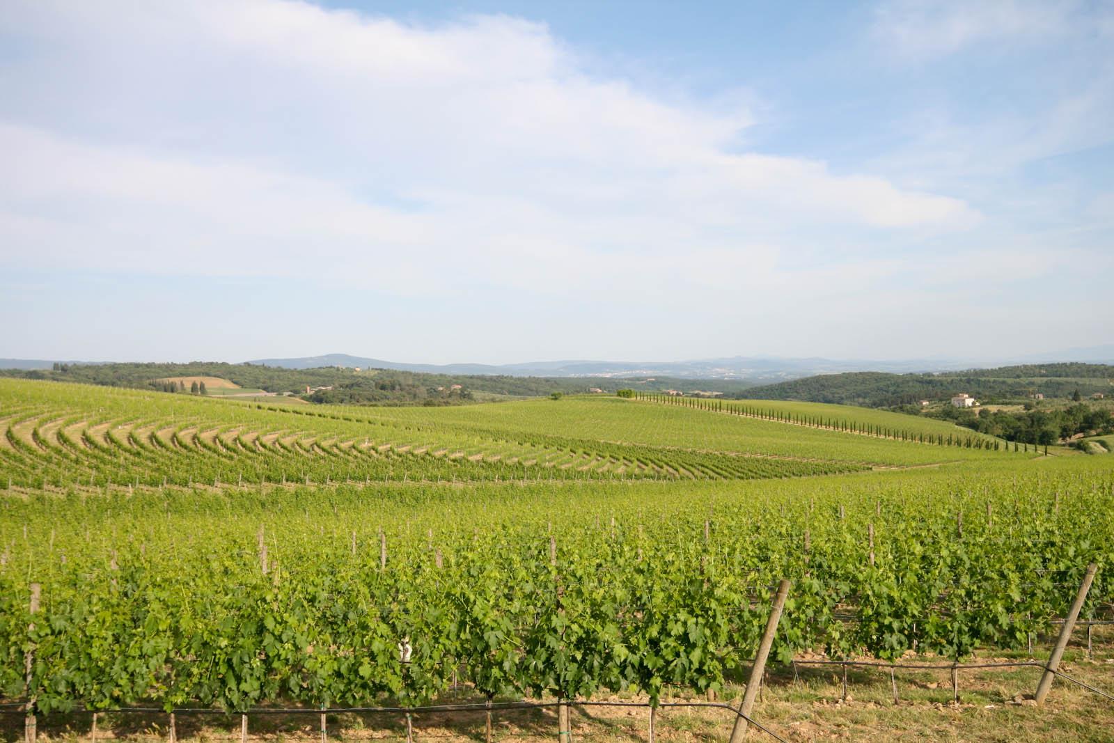 Winery DOCG Chianti Colli Pisani