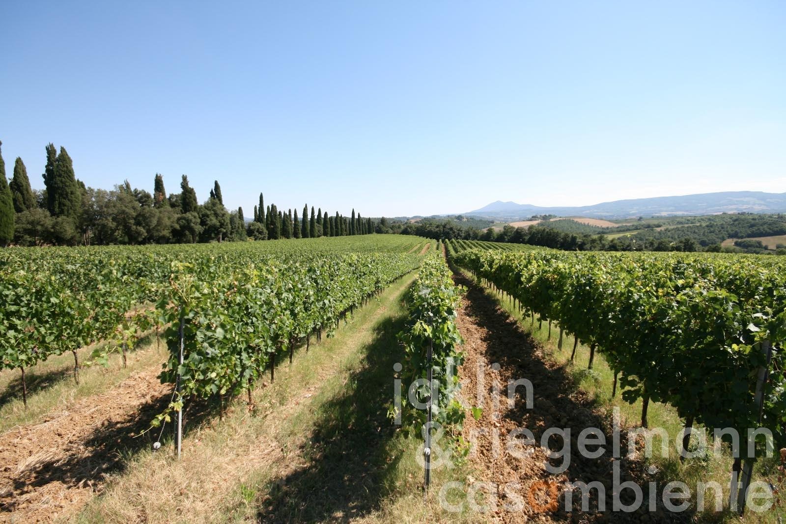 Prestigious Tuscan winery for sale Vino Nobile di Montepulciano DOCG