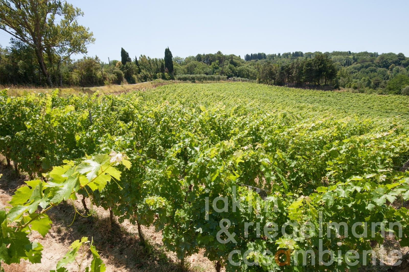 Organic winery and holiday rental property for sale in Tuscany in panoramic location close to the coast