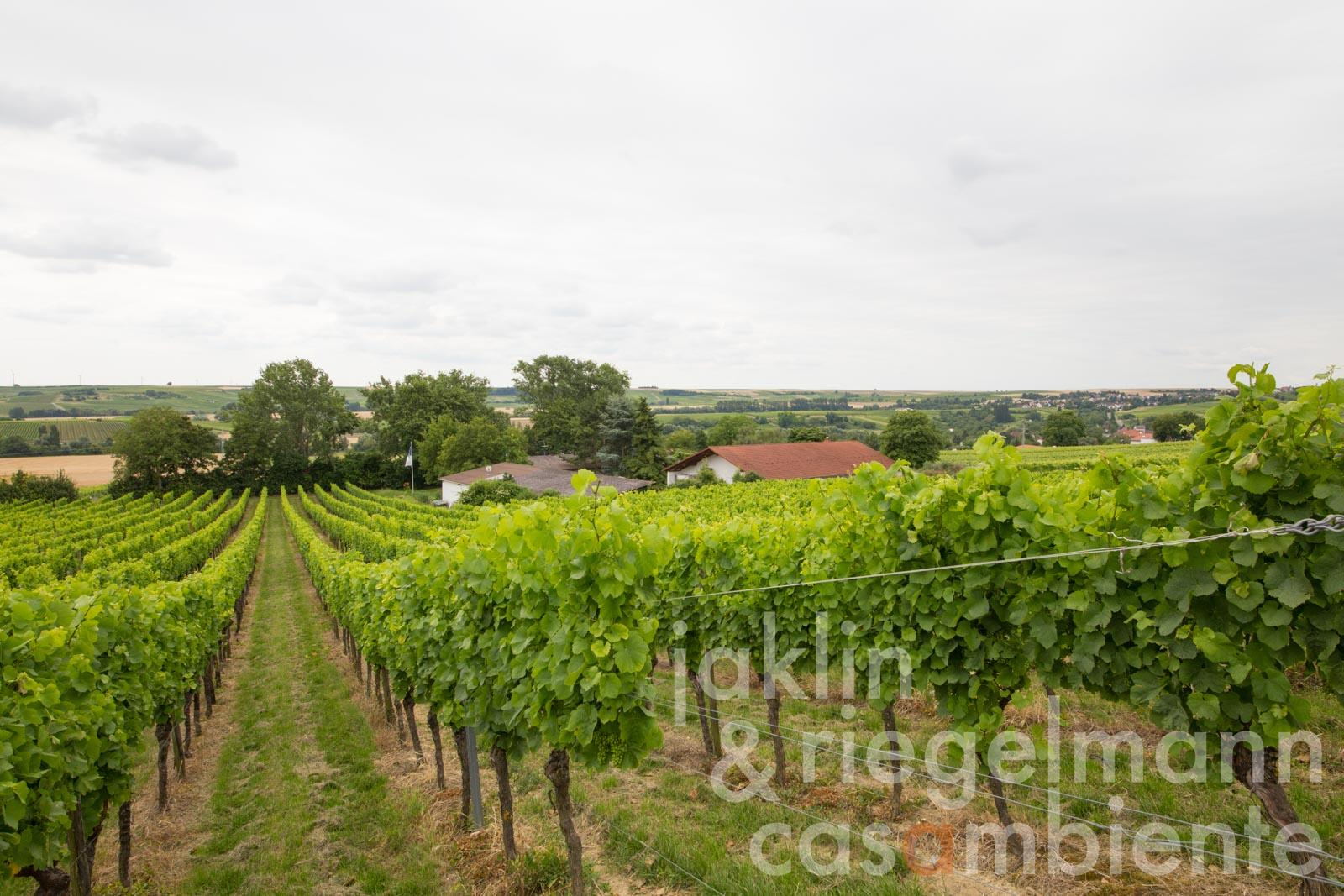 The well-established German winery for sale in Rhine-Hesse with a good track record and several awards
