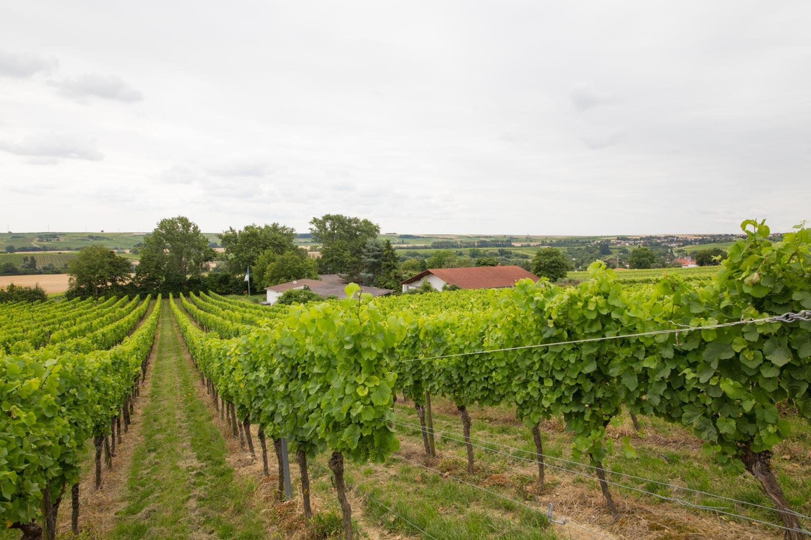 Das etablierte deutsche Weingut zu verkaufen in Rheinhessen mit sehr guten Prämierungen