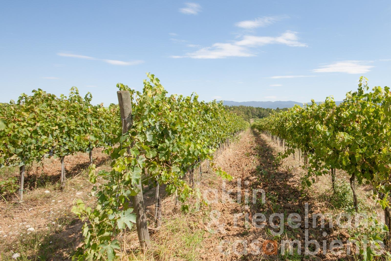 Well-known DOCG Vino Nobile di Montepulciano producer for sale with 30 hectares of vineyards