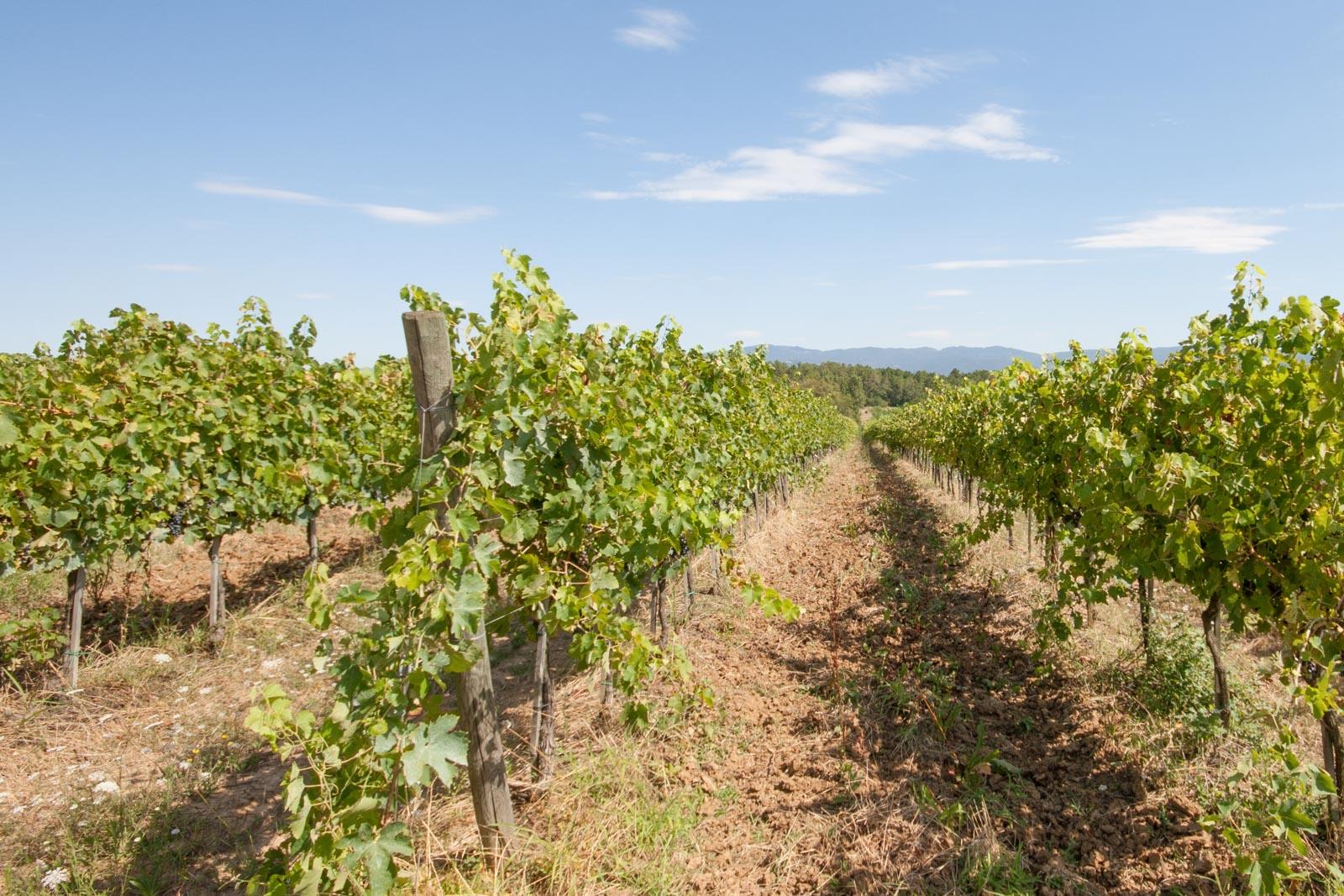 Azienda vinicola Vino Nobile di Montepulciano DOCG con 30 ha di vigneti in vendita