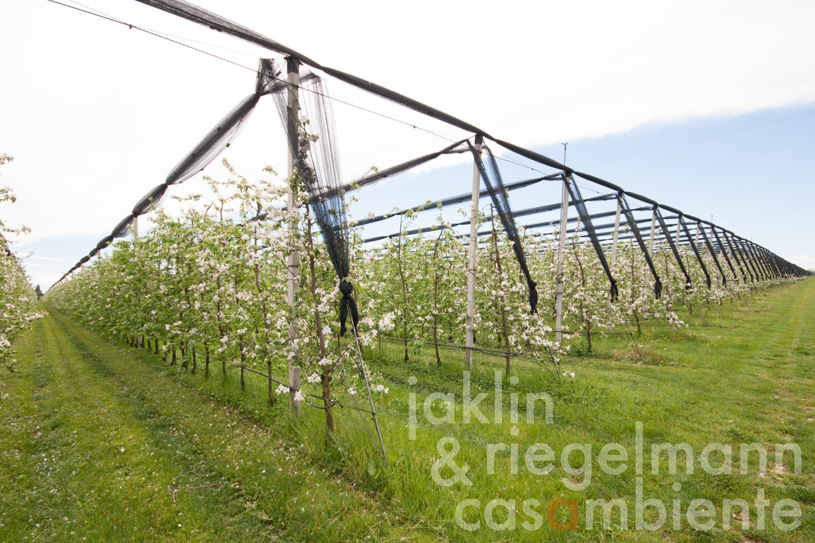 The organic apple orchard for sale on 17.5 ha with Naturland and GRASP certification