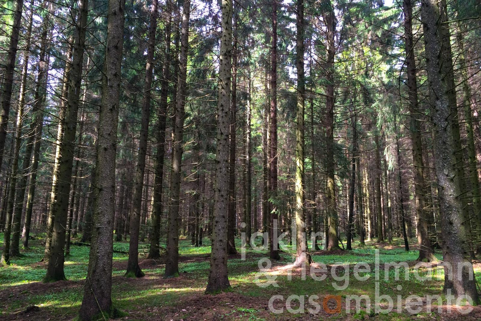 25 hectares of agricultural and forested land for sale on the river Saar close to Saarburg