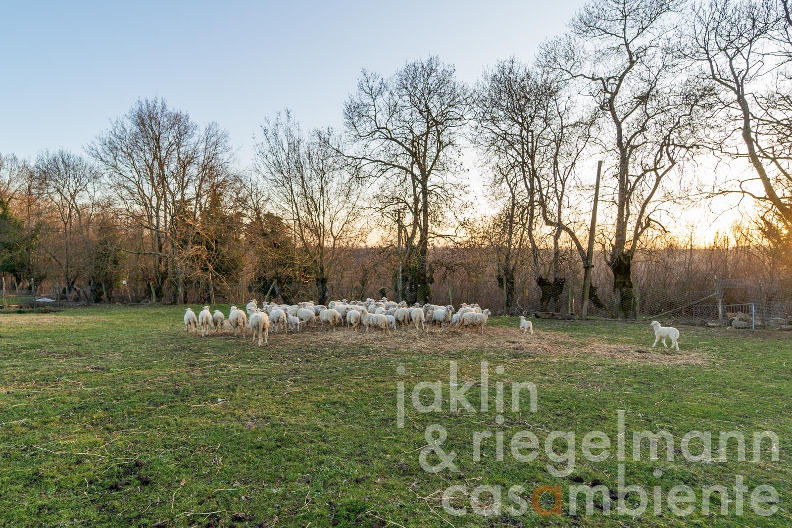 Agricultural estate with 260 ha of land and own hunting in the Alta Maremma in Tuscany