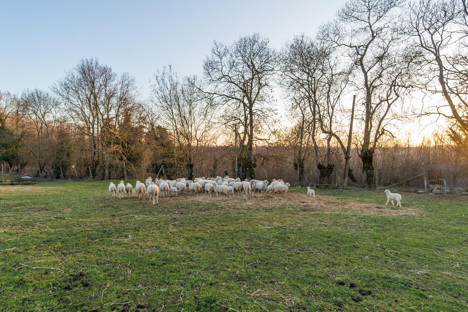 Landwirtschaftliches Anwesen mit 260 ha Land und eigener Jagd in der Alta Maremma in der Toskana