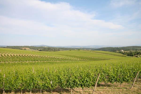 Weinberg DOCG Vino Nobile di Montepulciano und DOC Rosso di Montepulciano