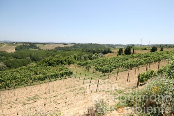 The vineyards of the property for sale with panoramic views across the Tuscan landscape