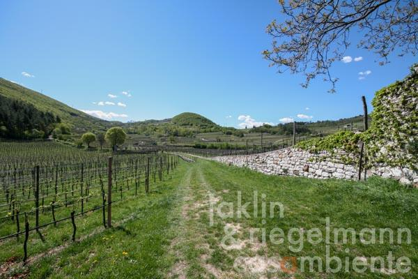 Boutique winery DOC Trentino for sale with typical manor house in panoramic setting