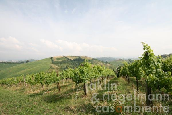 The Colli Bolognesi winery for sale in the Pignoletto Classico DOCG close to Bologna