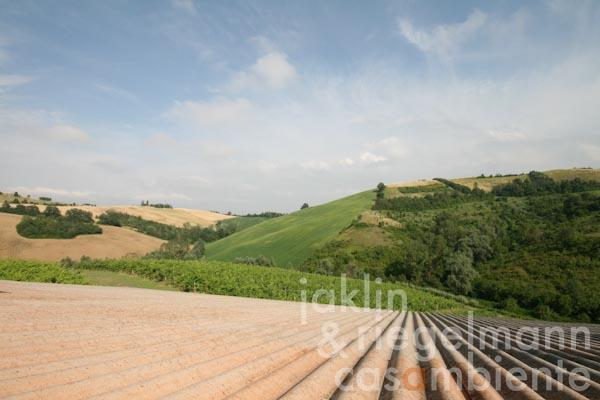 The view from the wine cellar's roof onto the lower vineyard
