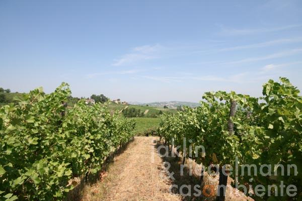 The winery Oltrepò Pavese DOC for sale with Agriturismo and 13 hectares of vineyards in panoramic setting in Italy