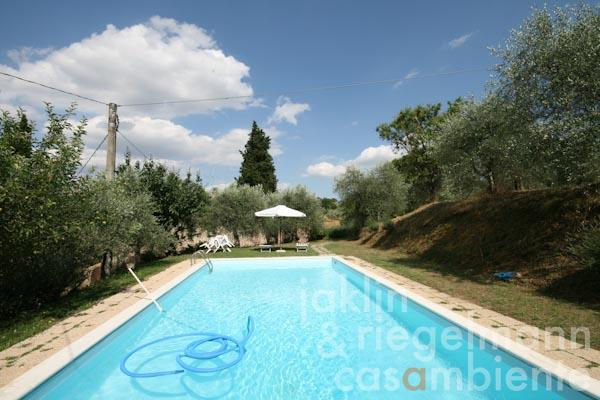 The pool terrace and the olive grove above