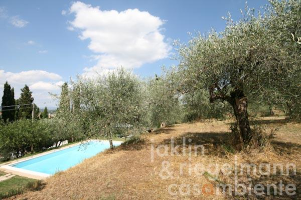 The olive grove above the country house