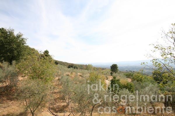 The panoramic view across the olive groves
