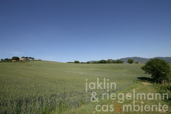 The view from the olive grove across the Umbrian hills
