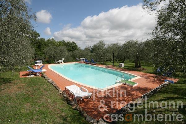 The pool amidst olive trees
