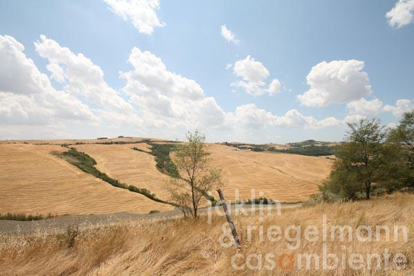 The view from the property across the Crete Senesi