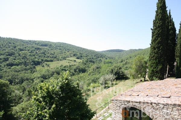 The view over the woodland in the Chianti