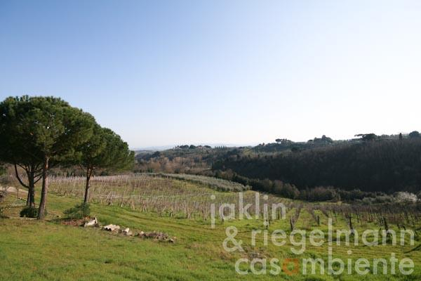 The view towards south across the old vineyard and across the Tuscan hills