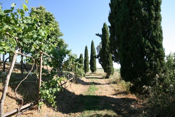 The appendant plot below the cordon vineyard