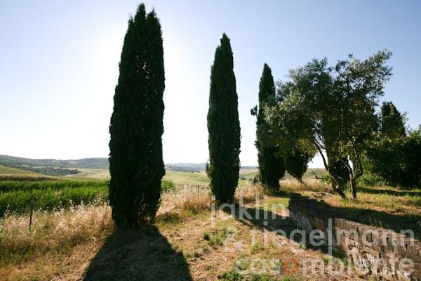 The view from the property across the Tuscan hills close to Buonconvento