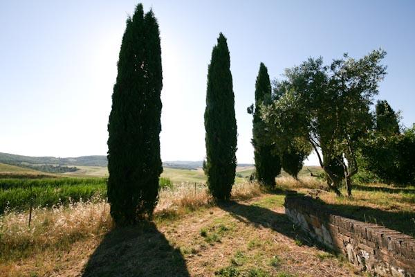 Der Blick vom Grundstück über die toskanischen Hügel nahe Buonconvento