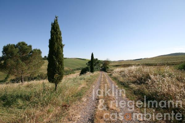 Die idyllische Zufahrtsstraße zum Anwesen