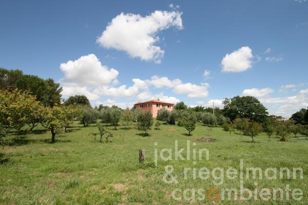 The country house and the surrounding meadows with olive trees