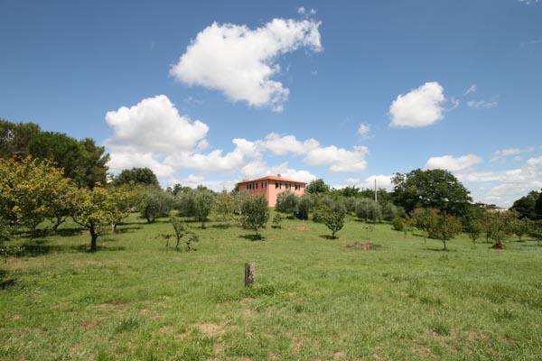 Das Landhaus und die umgebenden Wiesen mit Olivenbäumen