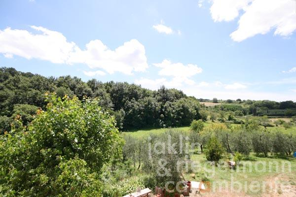 The view across the olive grove from the first floor