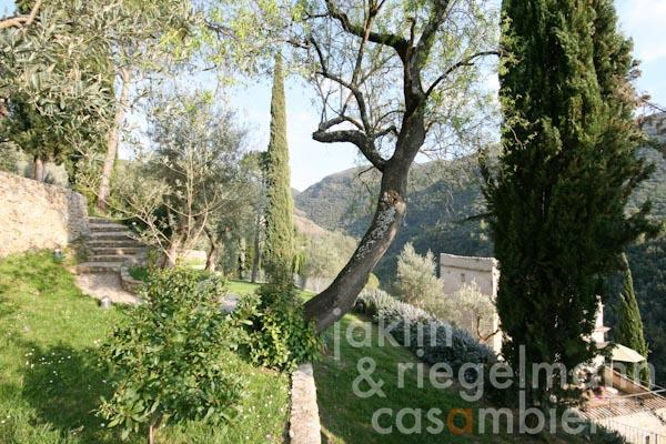 The terraced garden with many cypress-, pine- and olive trees
