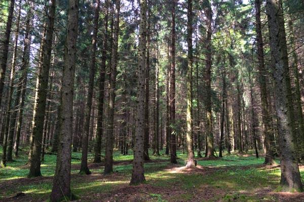 25 ha land- und forstwirtschaftliche Flächen zu verkaufen an der Saar im Raum Saarburg